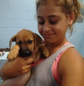 Southampton Animal Shelter